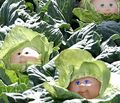 Cabbage_patch_dolls